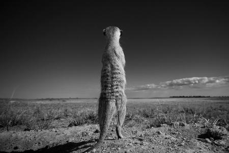 (c) Neil Aldridge
